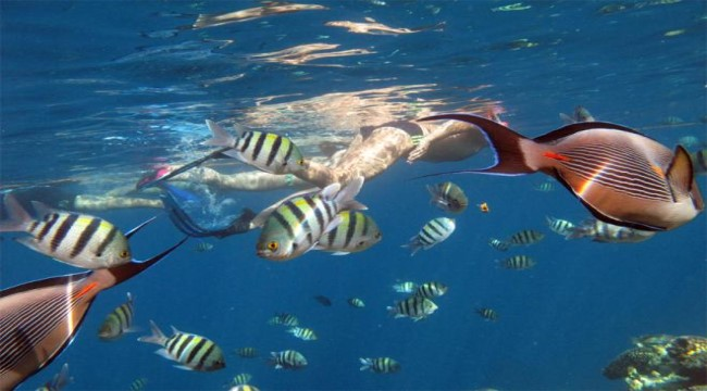 Sharm El Sheikh Glass Bottom Boat Trip 02 Hours Price From $ 20