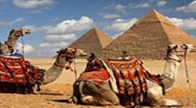 Camel Riding Or Horse Riding at Giza Pyramids
